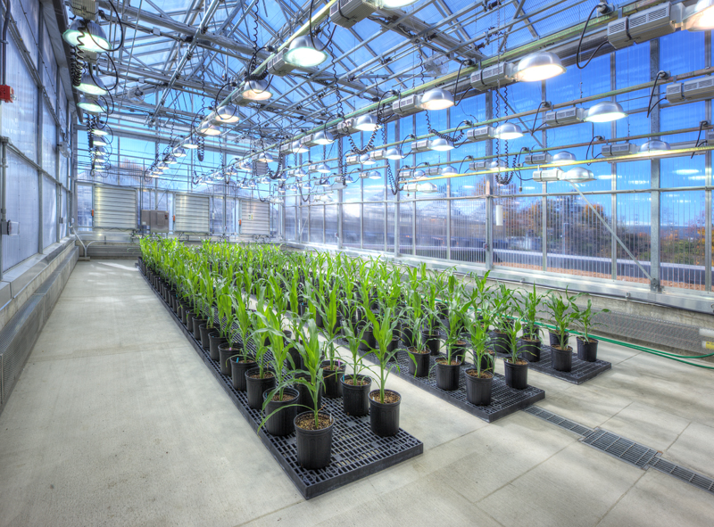 Danforth Greenhouse